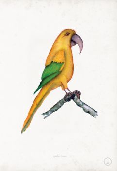 Parrots - signed prints